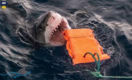 Nowy materiał chroniący nurków przed ugryzieniami rekinów