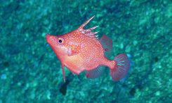 Pierwsze informacje z badań prowadzonych w głębokich wodach Morza Koralowego, z miejsc nigdy wcześniej niebadanych.
