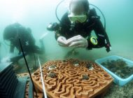 Płytki z terakoty do ratowania raf koralowych
