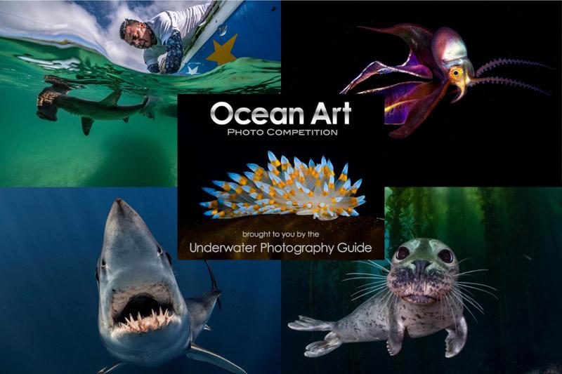 Ocean Art 2020 – trwa zgłaszanie prac do kolejnej edycji