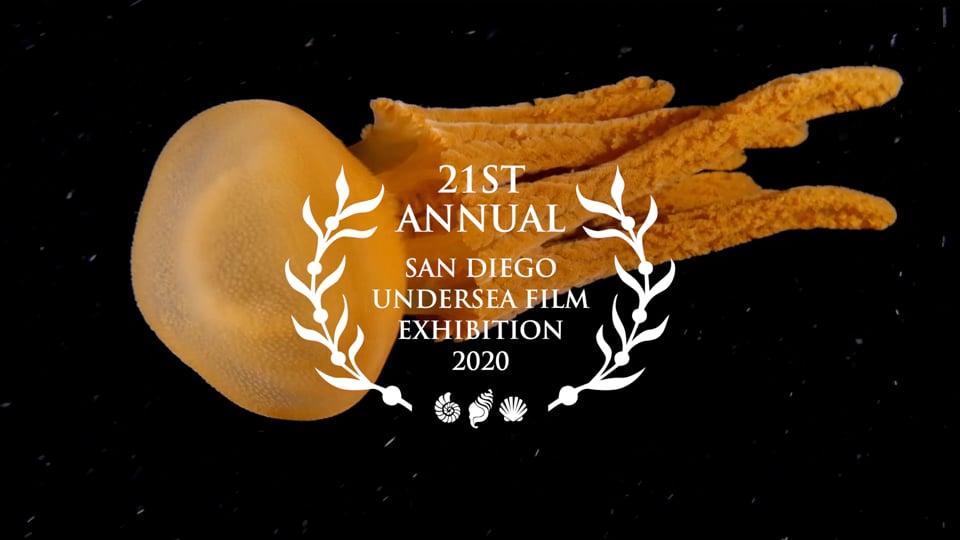 Festiwal filmów podwodnych SDUFEX 2020 w wirtualnej wersji