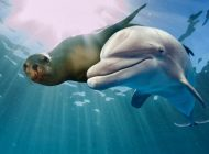 Zagrożone gatunki morskie mogą zostać zarażone SARS-CoV-2