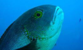 Znaleziono najstarszą tropikalną rybę rafową na świecie!
