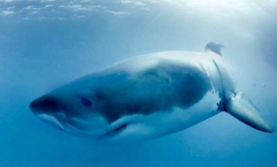 Kolumbia z zakazem połowu rekinów