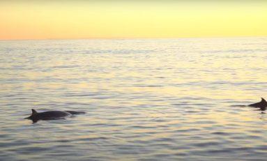 Odkryto nowy gatunek wieloryba