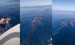 """Surfing na grzbiecie rekinia wielorybiego, czy rodeo z żarłaczem? - kontrowersyjne """"zabawy"""""""