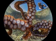 Najlepsze z najlepszych - Ocean Art 2020