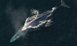 Pieśni wielorybów pomogą w obrazowaniu skorupy oceanicznej ziemi