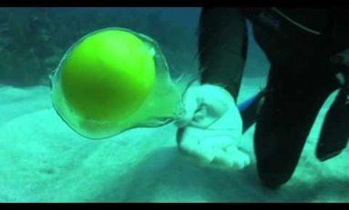 Co się stanie, kiedy rozbijemy pod wodą jajko?