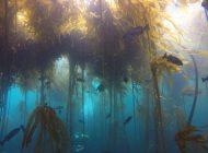 Znikające lasy wodorostów w Północnej Kalifornii