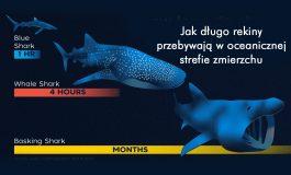 Jak długo rekiny przebywają w oceanicznej strefie zmierzchu