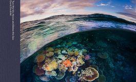 Nowa książka Davida Doubileta - mistrza fotografii podwodnej