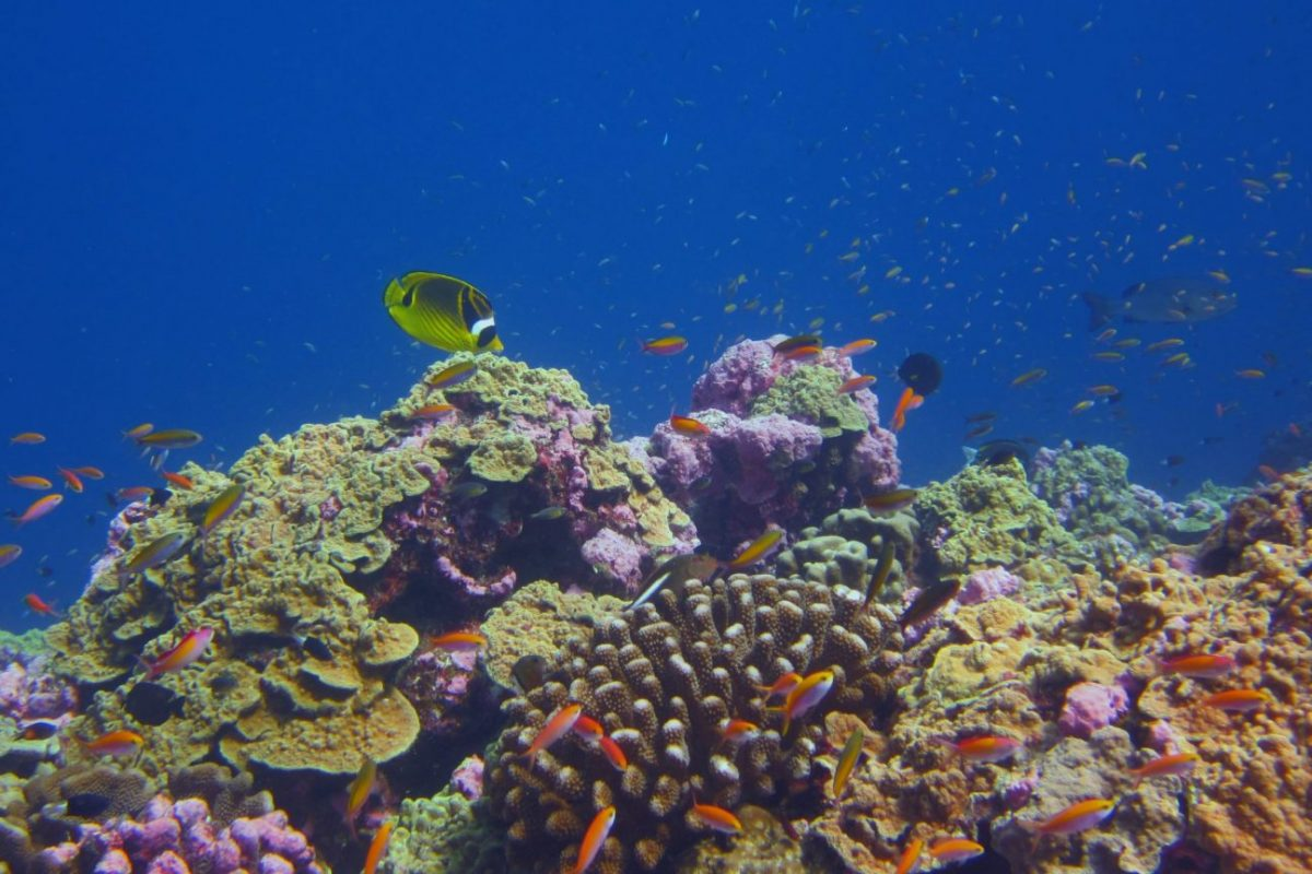 Czy wraz z ciągłym ocieplaniem się oceanów rafy koralowe stoją w obliczu mrocznej przyszłości?