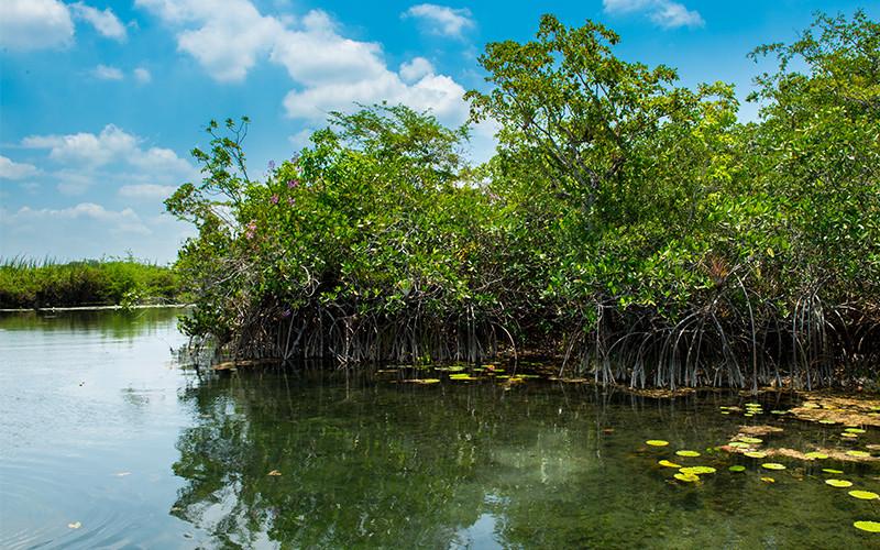 """""""Zaginiony świat"""" namorzyczynu, ukryty głęboko w sercu Półwyspu Jukatan"""