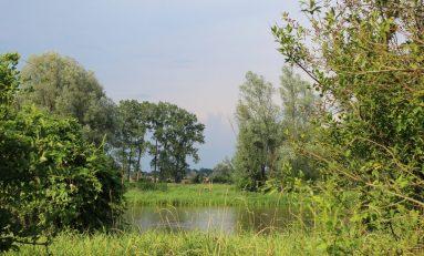 Wpływ gatunków inwazyjnych i nierodzimych na ekosystemy jezior